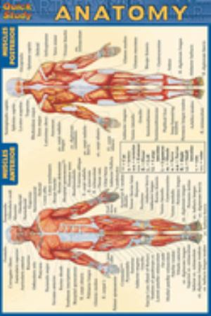 Anatomy Pocket Guide Quick Study | ABAC Bookstore