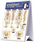 Anatomy & Nutrition Easel