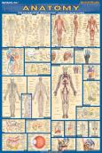 Anatomy Poster Laminated