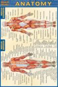 Anatomy Pocket Guide Quick Study